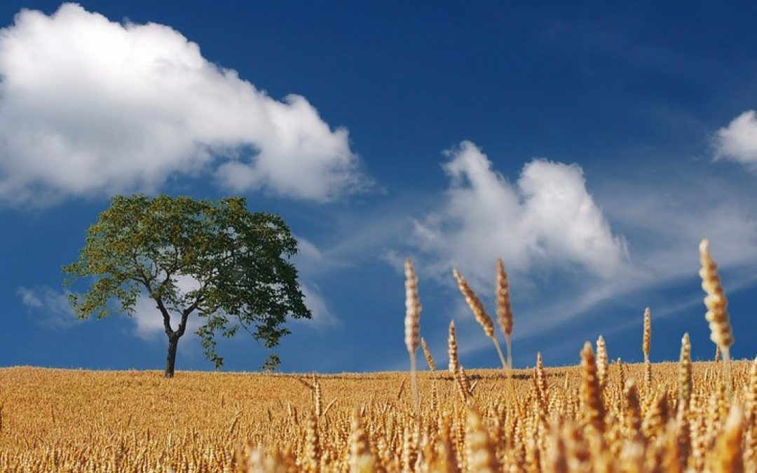 Ta' på picnic i bondelandet, når markerne høstes