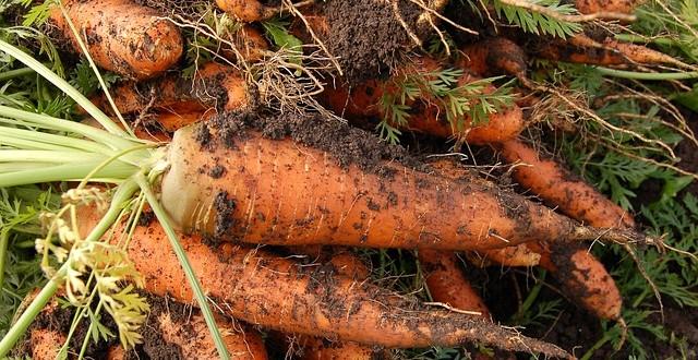 carrot-551661_640-640x330